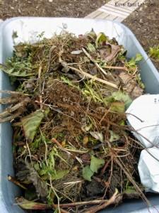 Kottikärryllinen tuli kasvijätettä päivän aikana.
