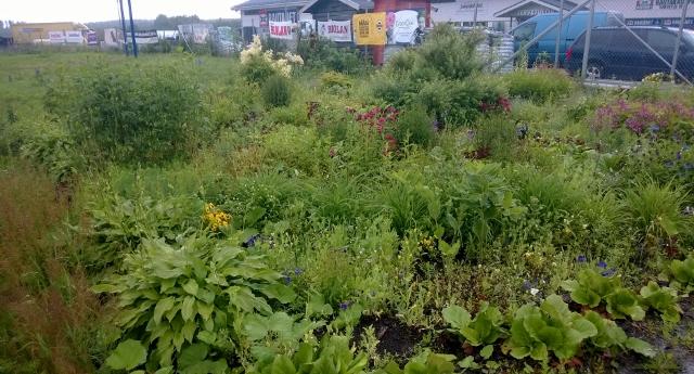 Rikkakasvit Riesana – Rautakauppa Mehto Oy