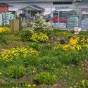 Keväistä Kukkaloistoa Rautakaupalla